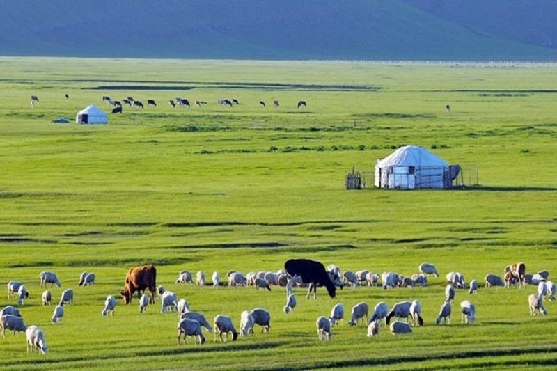 2018年6月18日呼伦贝尔草原牧民那达慕盛会 魅力阿尔山结伴同行