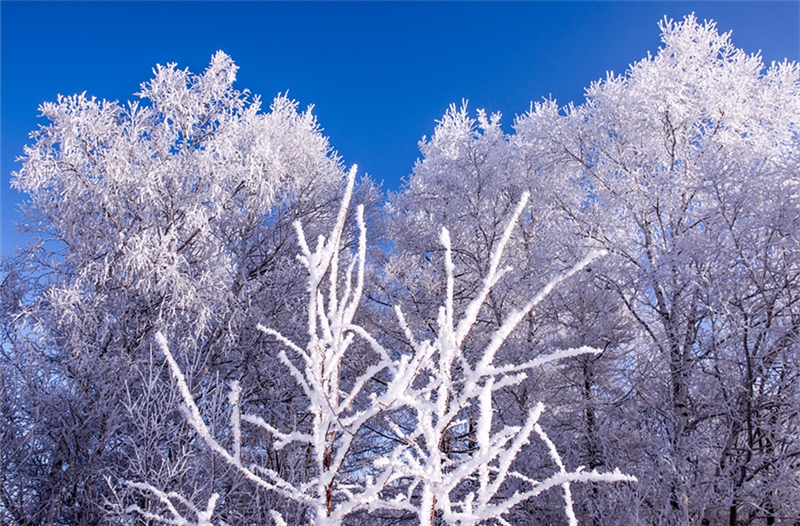 呼伦贝尔冬季旅游