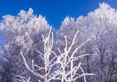 呼伦贝尔冬季旅游,冬季滑雪注意事项全攻略