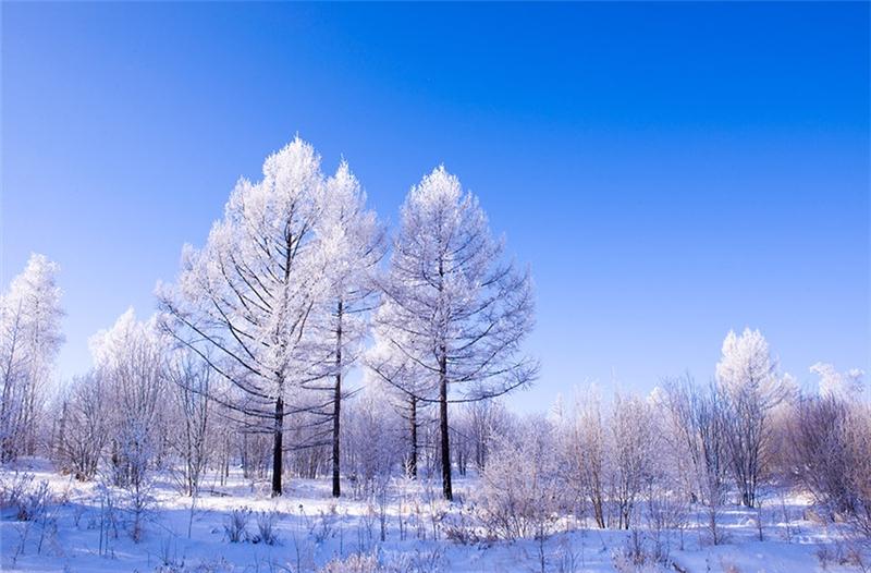 呼伦贝尔冬季旅游结伴,中国冷极根河结伴之旅