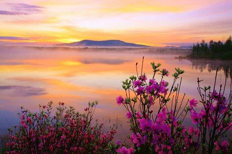 阿尔山杜鹃湖2