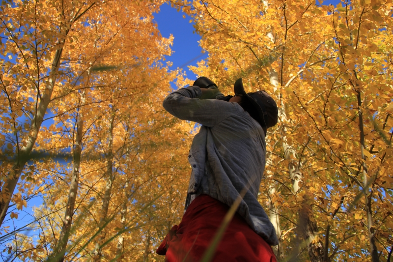 秋季摄影游