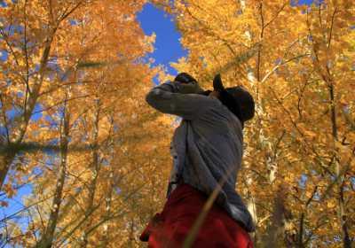 呼伦贝尔9月份秋季草原旅游攻略,呼伦贝尔草原旅游景点