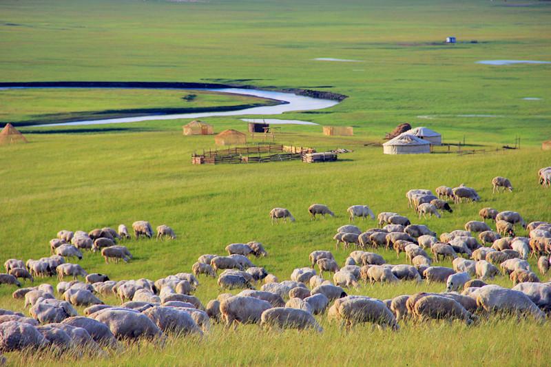 7大理由告诉你呼伦贝尔羊肉为什么最好吃?真的不一样