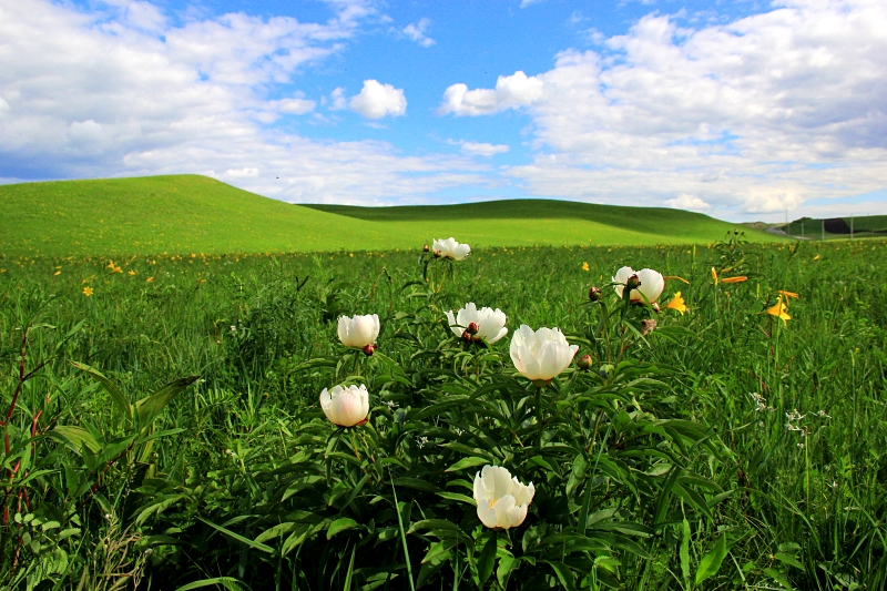 夏天去呼伦贝尔大草原游玩有什么攻略和注意事项呢?