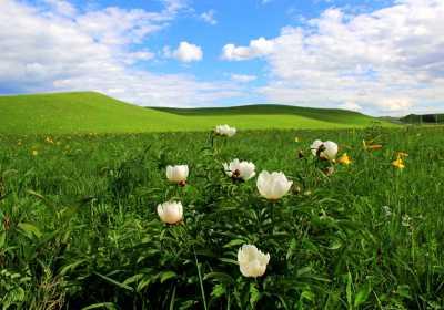 最会玩的人,都爱上一望无际的呼伦贝尔大草原!