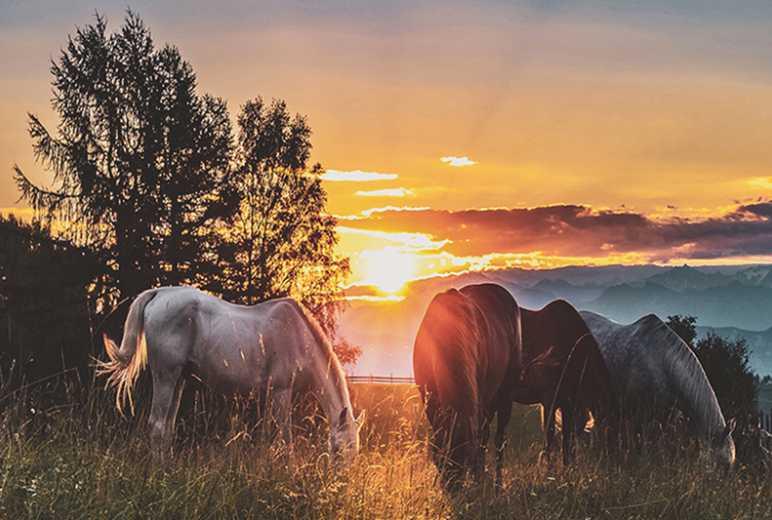 重走游牧之路,骑马穿越呼伦贝尔大草原40公里一日活动