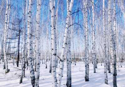 冬季旅游为什么要去呼伦贝尔?看了全明白了!