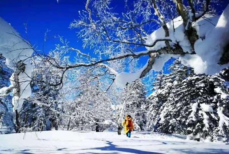 徒步东北林海雪原,重走抗联之路,传承红色精神