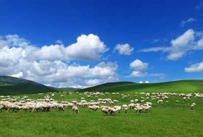内蒙古118家旅游景区向全国抗疫一线人员免门票