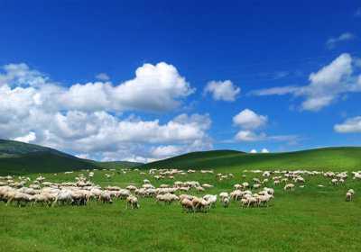 风向标自由行致每一位来呼伦贝尔草原旅游的小伙伴的话!!!